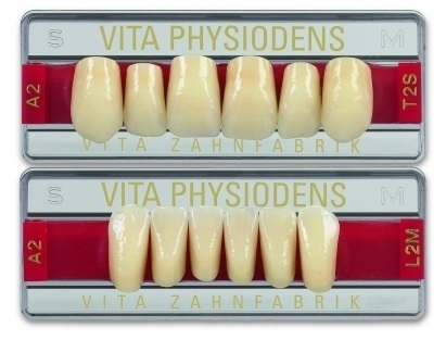 Vitapan Physiodens Frontzahn classical