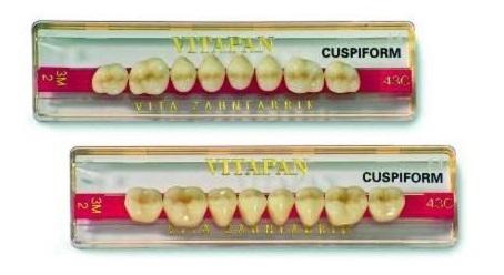 Vitapan Cuspiform Seitenzahn classical